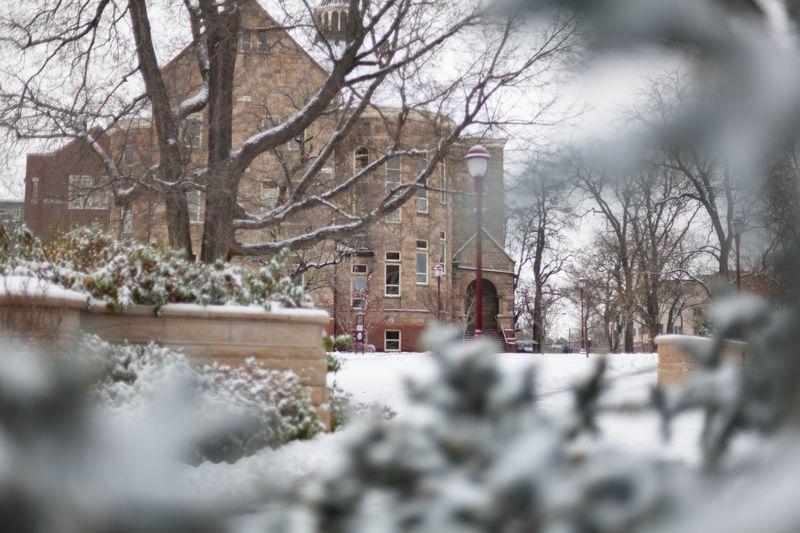 5-University Hall Pine Tree
