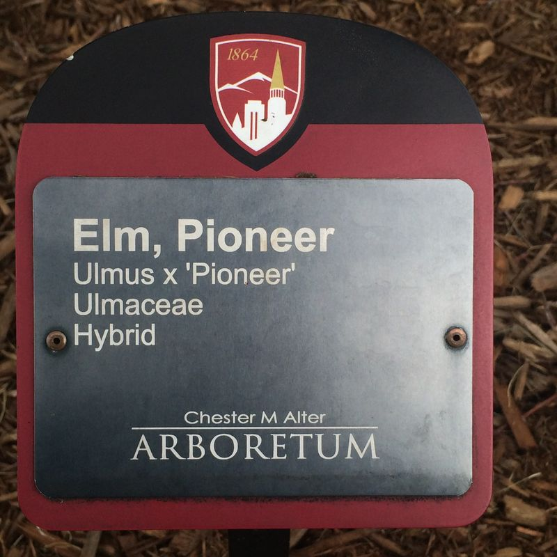 Pioneer Elm sign pic 2